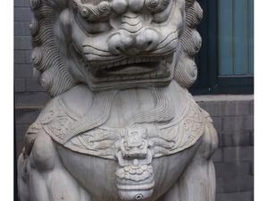 ob_146407_lion-protecteur