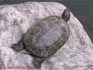 ob_30c54a_bronzette-de-tortues