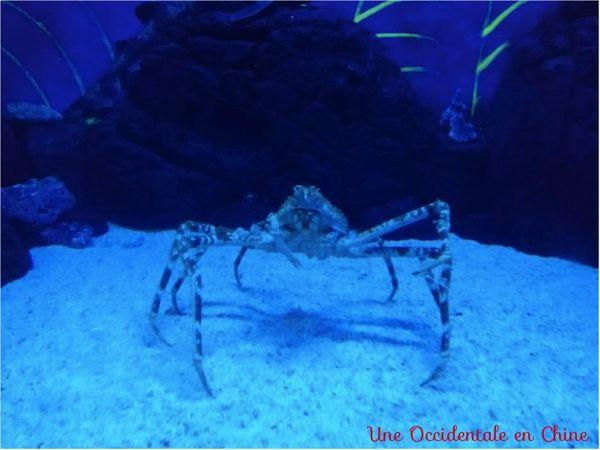 ob_596f36_crabe-du-japon