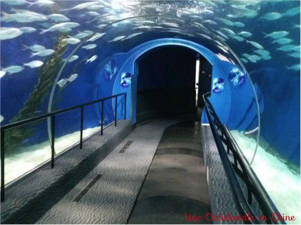 ob_8fd23b_tunnel-aquarium