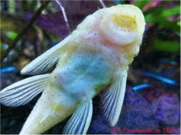 ob_a82179_bisous-poisson