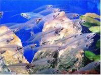ob_c95b3d_poisson-vue-arete