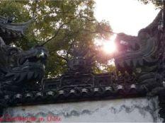 ob_d5d611_dragon