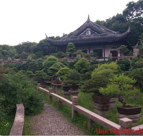 ob_e9c59b_jardin-bonzai