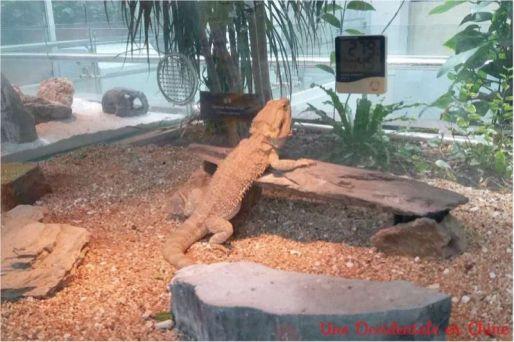 ob_f35cf8_reptile